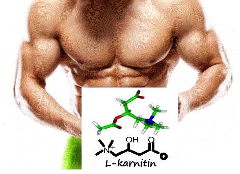 Karnitinin Vücuttaki Etkileri